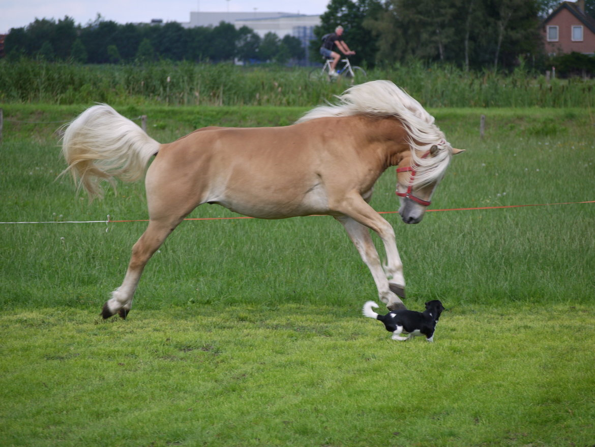 Paardencoaching-Tarieven