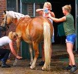 Biologische dierenshampoo - 100% natuurlijk_