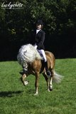 Haflinger dekhengst Liz. 314/ T  Nassau _